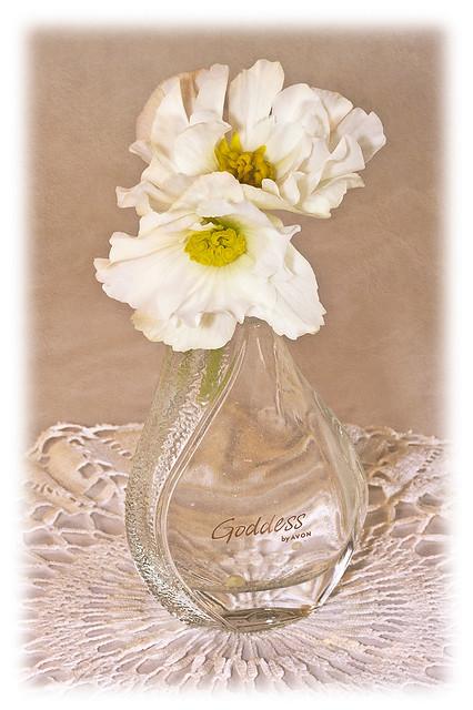 Still Life Begonia Flowers