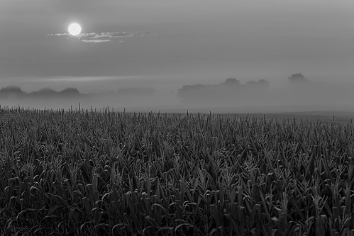 columbus blackandwhite bw fog wisconsin sunrise cornfield unitedstates scenic ©jrj
