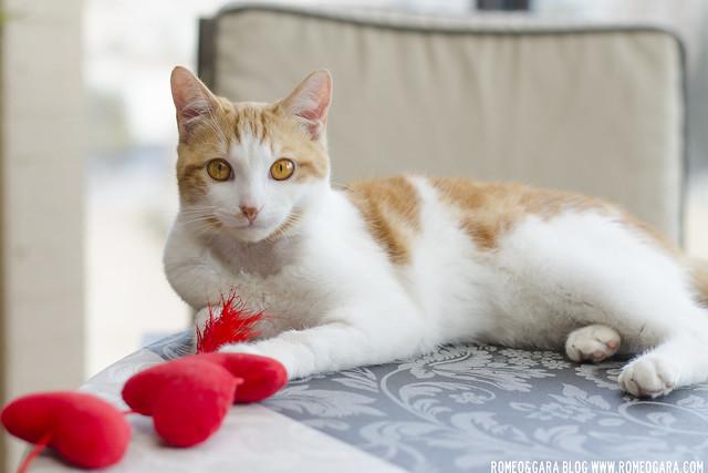 Luke, gatito en adopción en Valencia