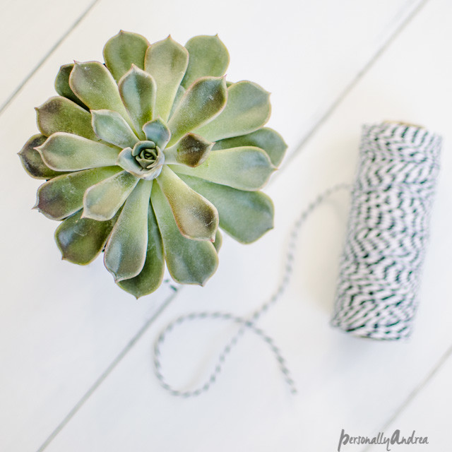 Succulent and Twine // Top Down Photography