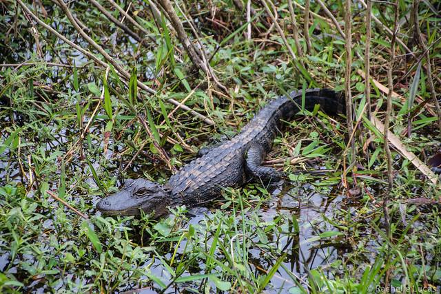 Wild Florida Orlando-68
