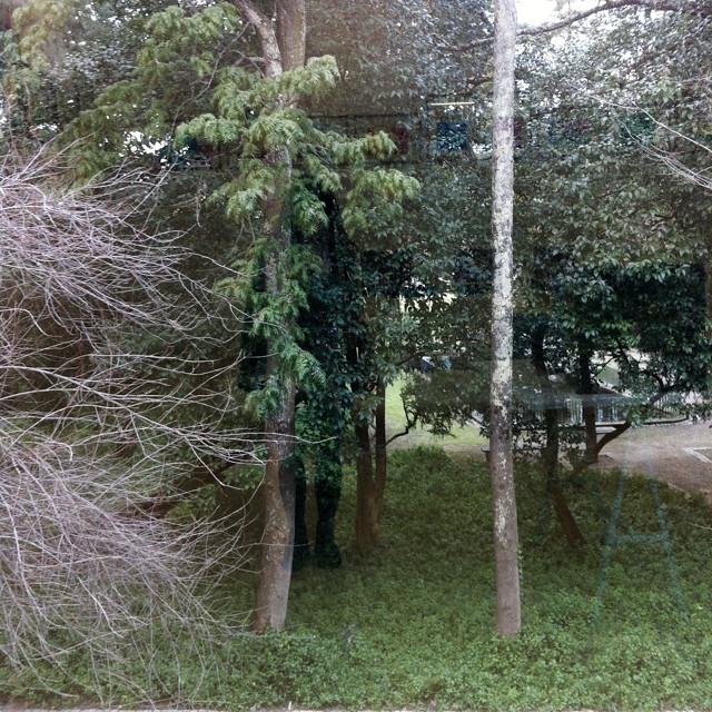 cabeça no mundo das árvores