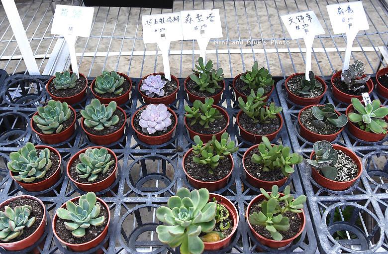 台中多肉植物花園先生花市22