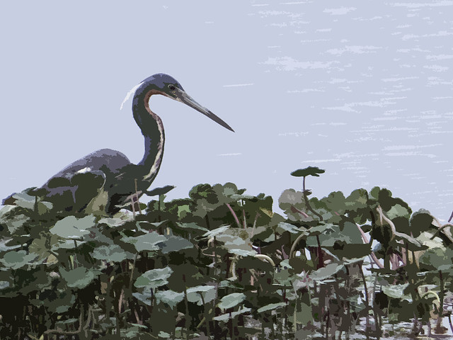 Tricolored Heron filter