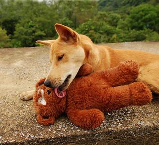 ,, Teddy Bear ,,