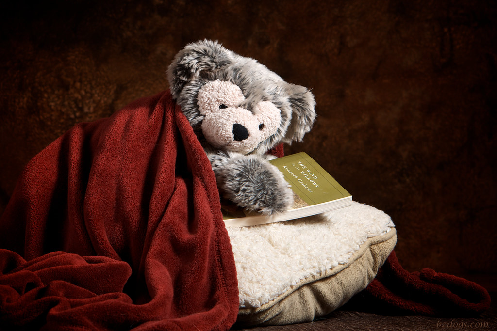 Bear and a Book