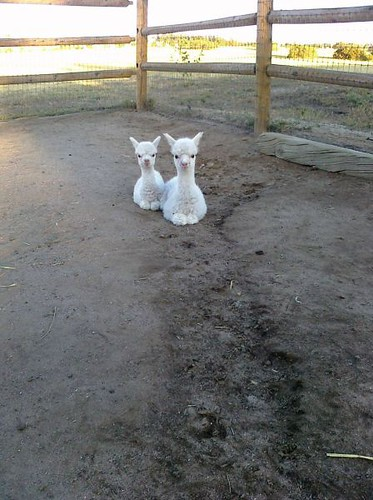 9113844475 7b8d162a60 funny cute animal pics part143 5