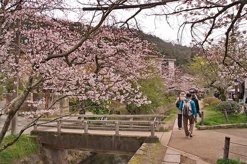 【写真】2013 桜 : 哲学の道/2018-12-24/IMGP9231