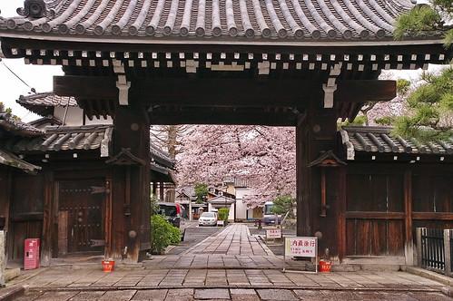 【写真】2013 桜 : 本隆寺/2020-05-19/IMGP9110