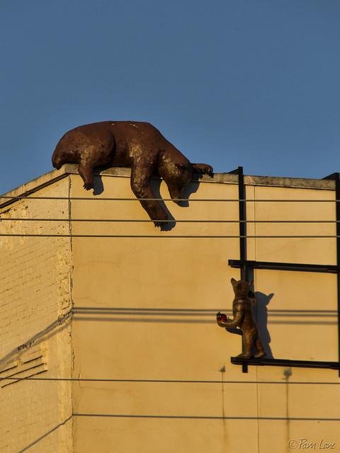 Kalispell bears