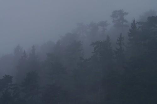 Mitteleuropäischer Regenwald   /   Mid-European rain forest