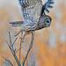 2nd Place - Fauna - Linda Martin - Barred Owl