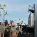On and around High Line Park by jewast