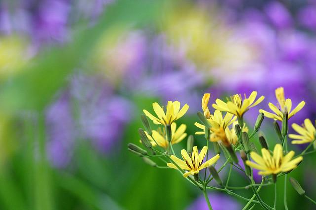 写真_庭に咲く野の花