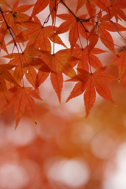 写真_紅パターン1