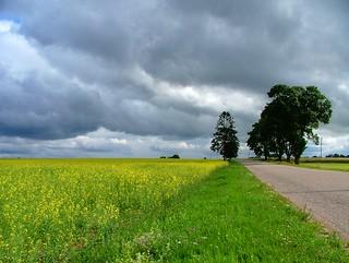 Stormy_summer_2
