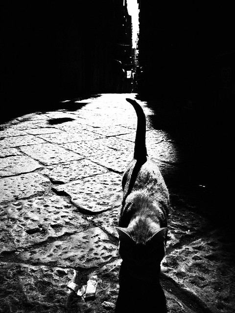 the cat of the alleys