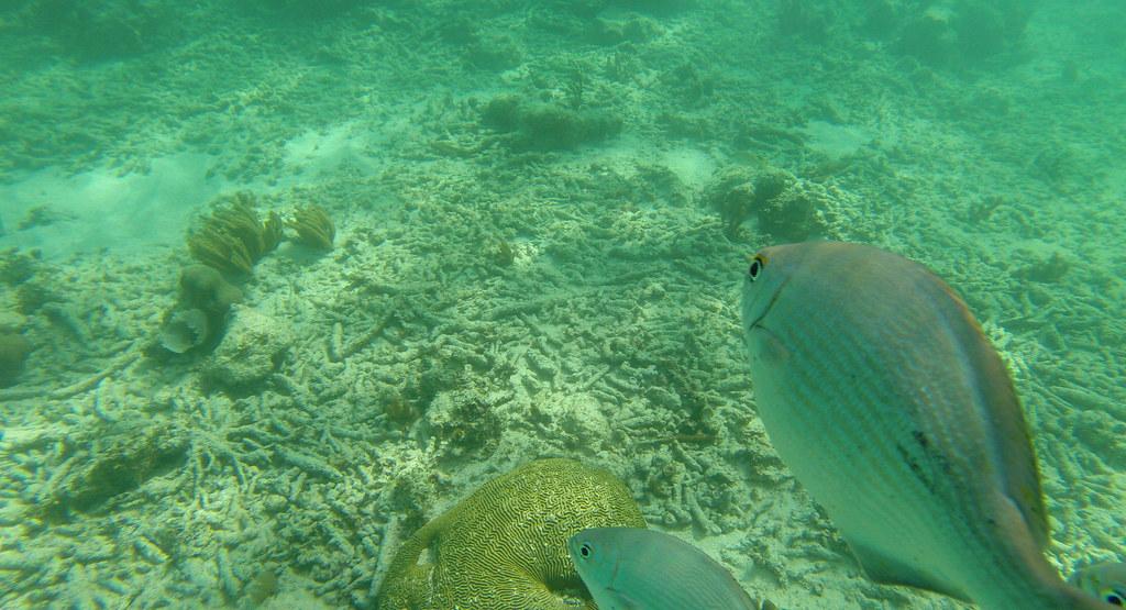 Yucatan trip photos from snorkling 11976044034_18b02e2fc2_b