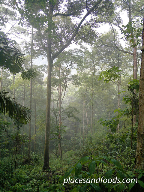 FRIM (Forest Reserve Institute of Malaysia) 1