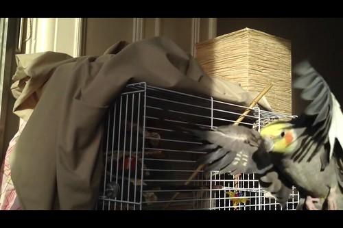 Flying parrot 2