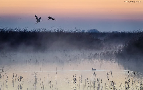 mist water birds sunrise landscape