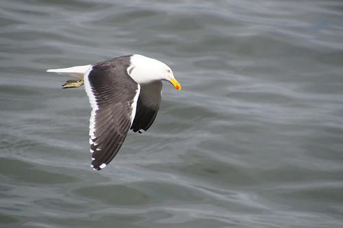 220 Vogel in Ushuaia