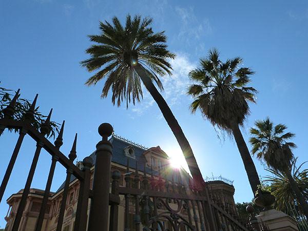 palmiers et soleil