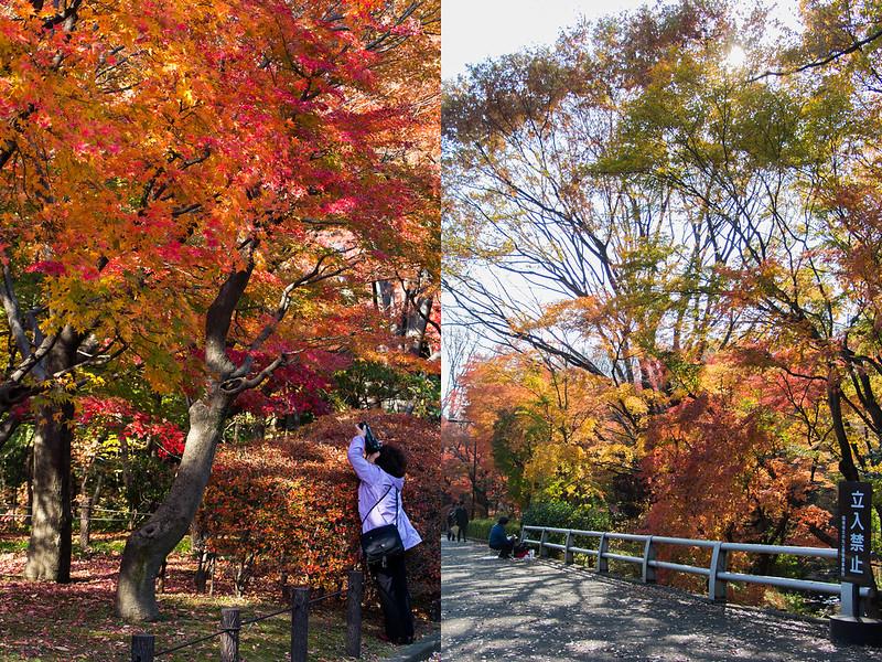 kitanomaru-park-4
