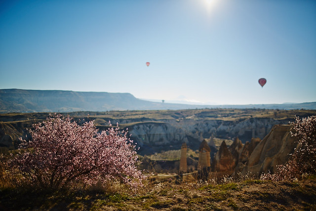Blossoming over the valley