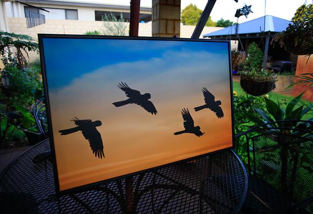 Beautiful image of mine upforsale, Black Cockatoo sunrise $380