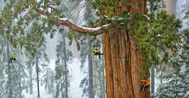 Gigantesco árbol de 3200 años capturado en una sola imagen. Impresionante! 14185996205_b966daa28d_z