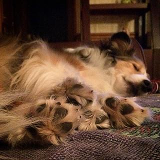 Fluffy feet #Maggie