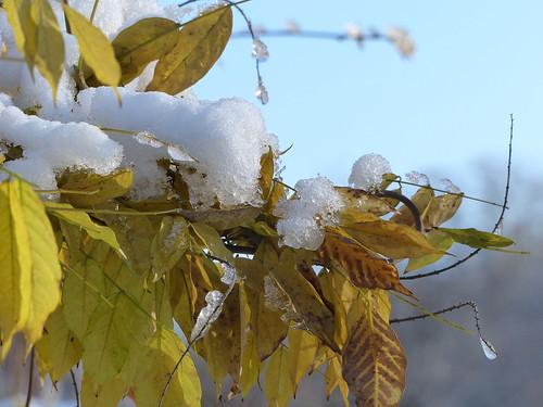 Touch of snow - Une touche de neige