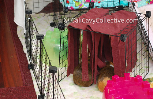 How to make your guinea pig a fleece forest instructions