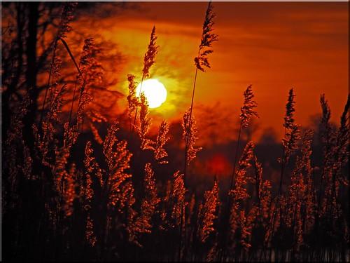 sunset geotagged deutschland sonnenuntergang deu schleswigholstein scharbeutz pönitzamsee olympusem10 geo:lat=5403596445 geo:lon=1070026227