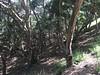 Palo Corona Regional Park, May 2016