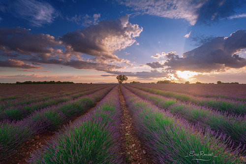 sunset france nature field canon landscape photography spring europe lavender provence paysage lavande printemps canonef1740mmf4lusm champ coucherdesoleil tourisme fragrance nisi alpesdehauteprovence 2016 valensole provencealpescôtedazur lavandin canoneos5dmarkii ericrousset filtrenisifstopperirgnd809 portefiltrenisiv5system