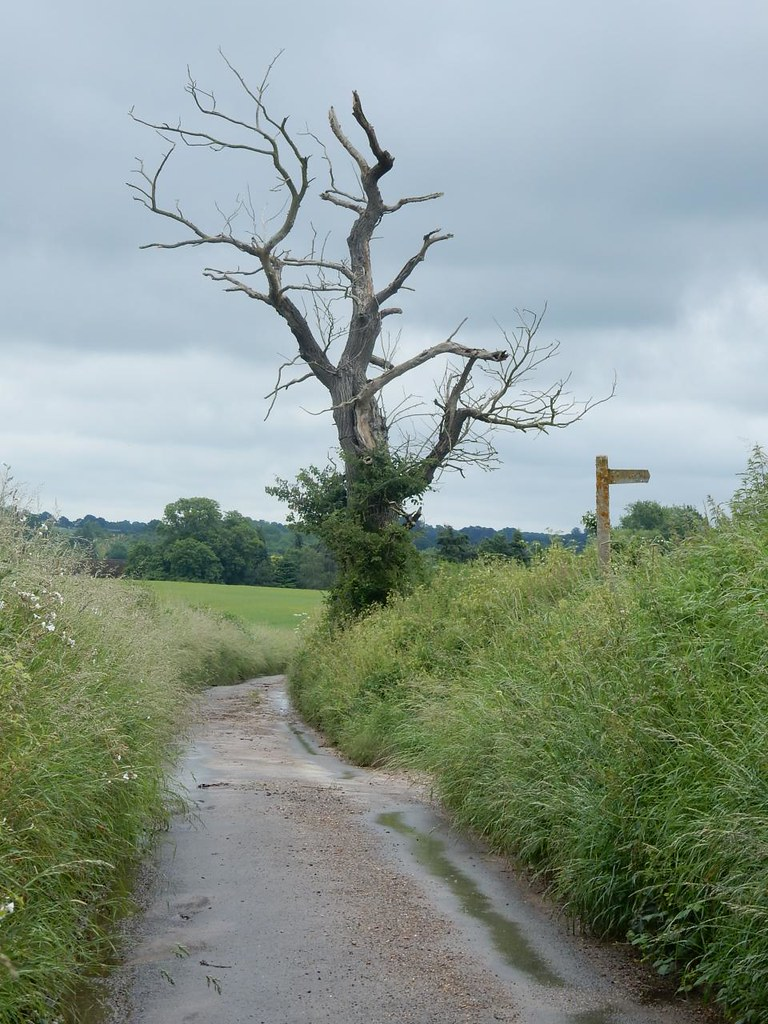 Bare tree Bures to Sudbury