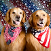 Patriotic Dogs by bztraining