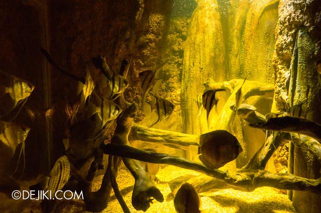 River Safari -