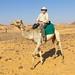 El Nigel on favourite racing camel by jasbond007