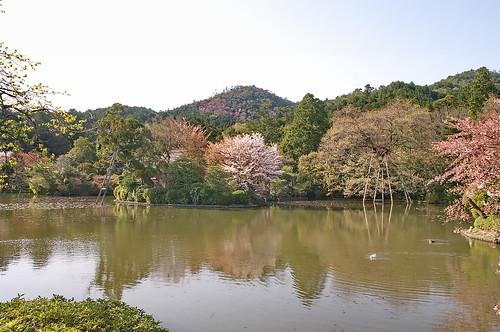 【写真】2013 桜 : 龍安寺/2020-01-22/IMGP9848