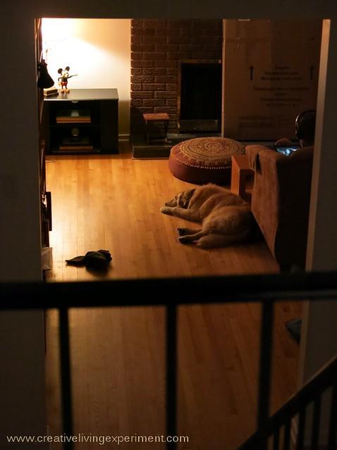 Evening Comfort
