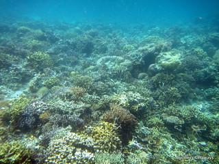twin-peaks-reef-coron-palawan.jpg
