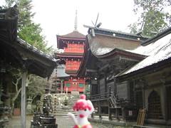 Medicham in Tamba, Hyogo 7 (Kaibara Hachiman Shrine)