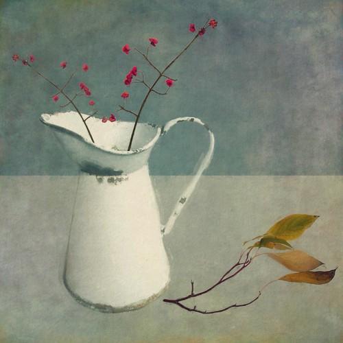 Spindle Berries by Sarah Jarrett