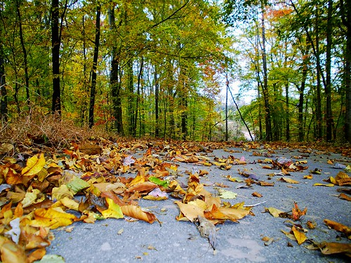 autumn plants fall nature landscape outdoors scenery hiking scenic northcarolina 2013