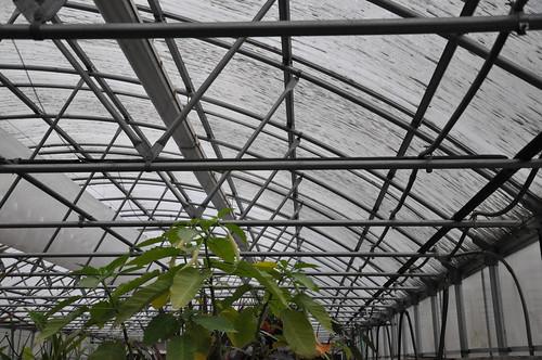 Greenhouse at Trevor Park