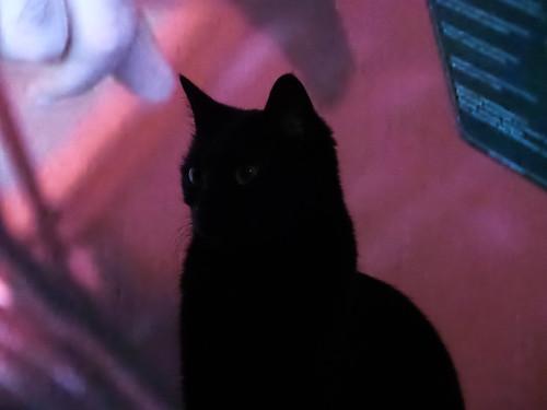 Il gatto nero davanti alla macchina rossa by Ylbert Durishti