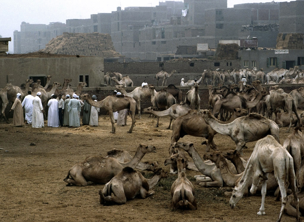 19. Mercado de camellos. Autor, National Geographic